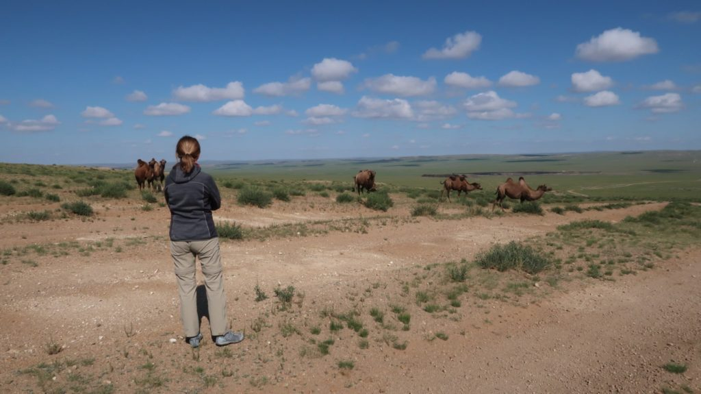 blue sky over mongolia and camels