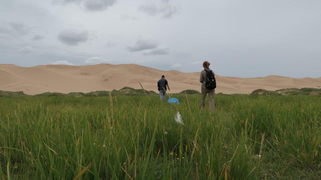 Sanddünen im Süden Mongolei