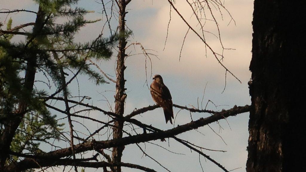 Tsenkher - Vögel