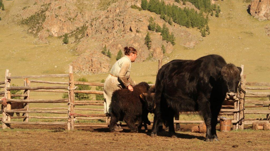 Terkh Nationalpark Mongolia