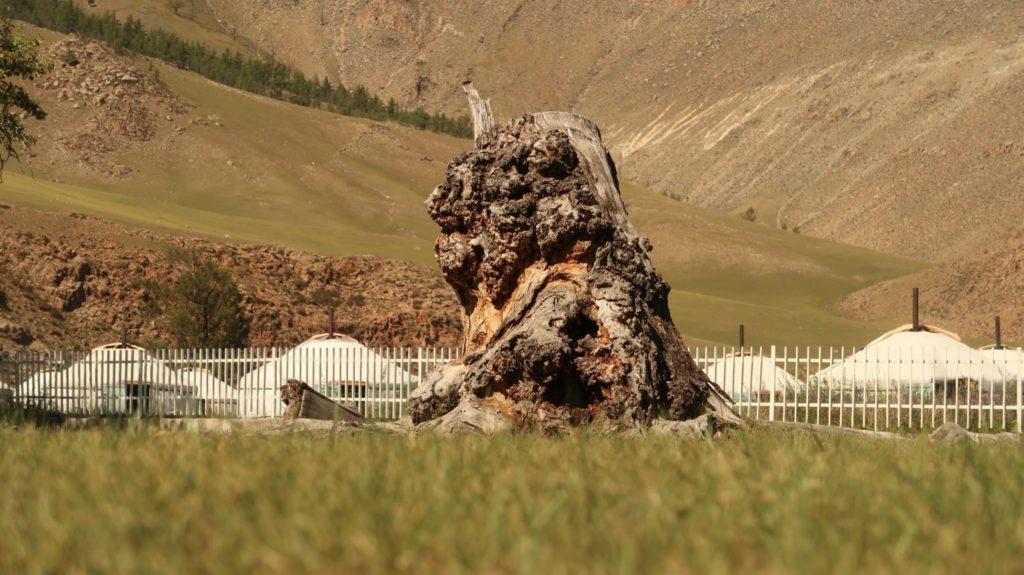 Reiseberichte aus der Mongolei
