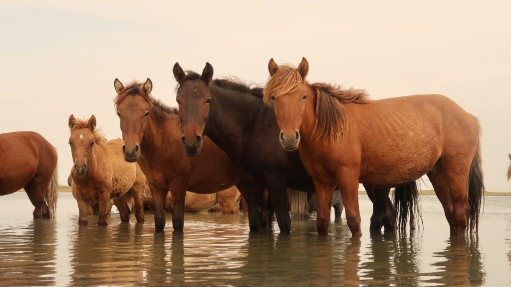 Gun Galuut Nature Reserve Mongolia