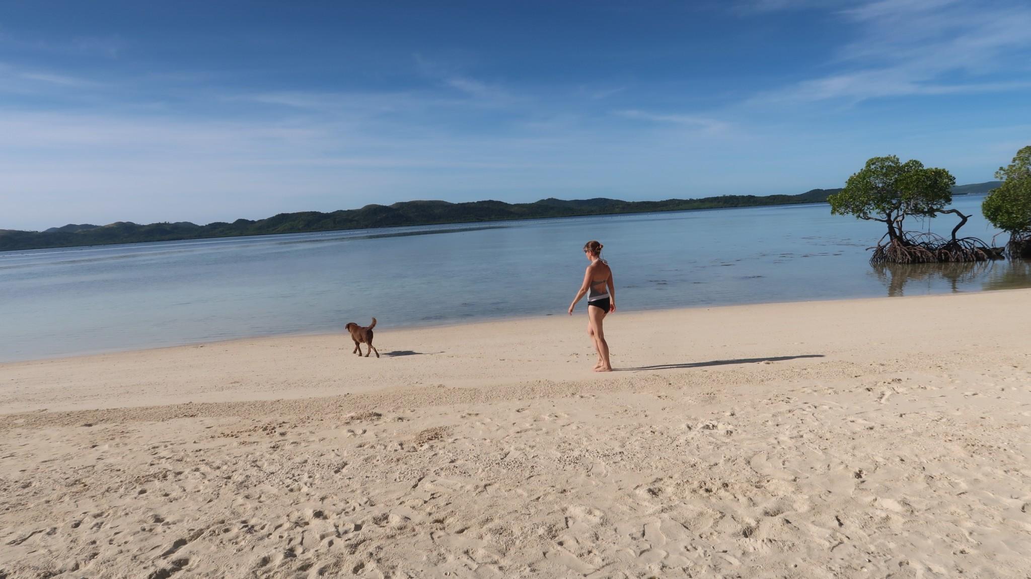 Seehund auf den Philippinen, unsere Reiseberichte