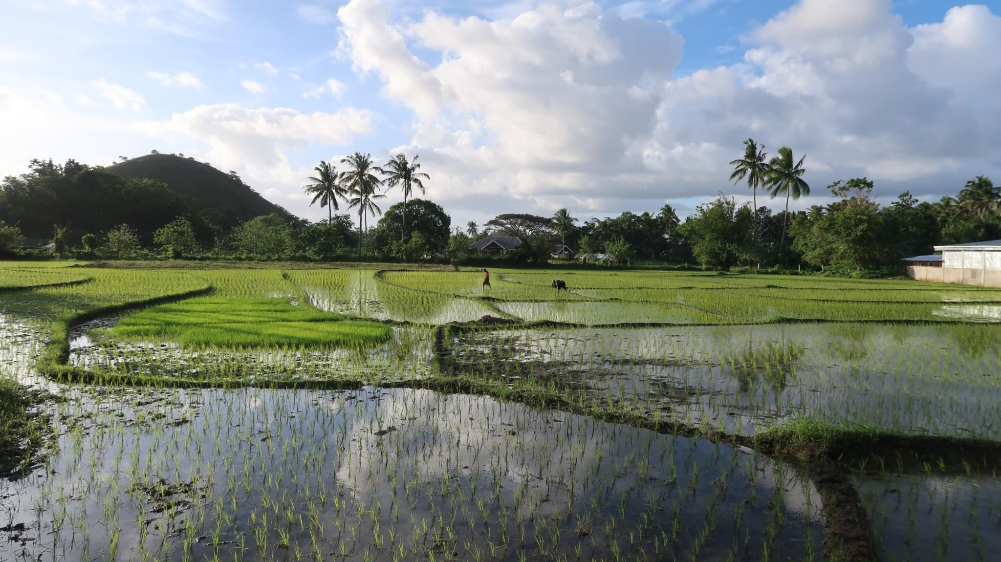 Reisfelder Bohol