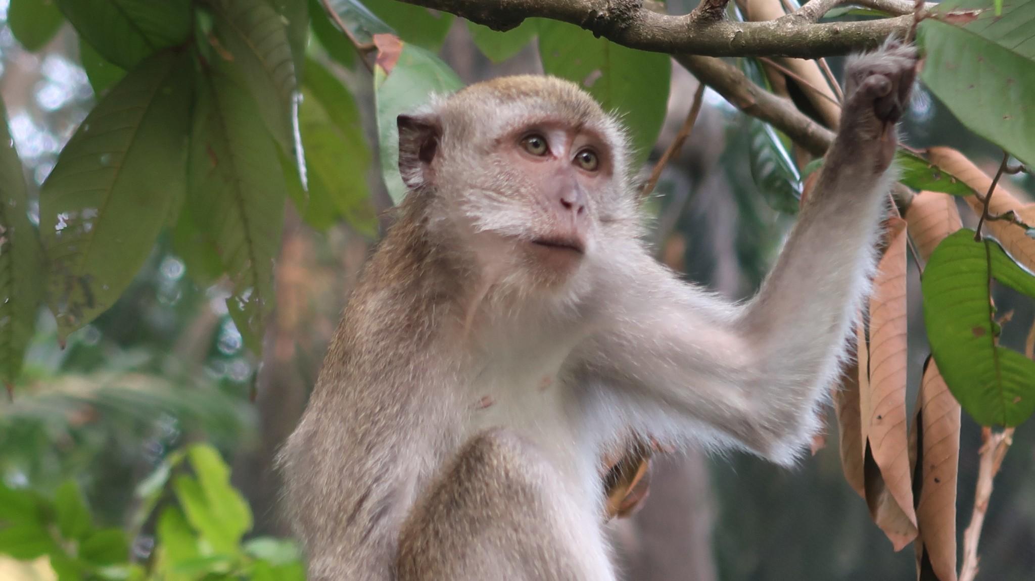 Affen im Vogelpark