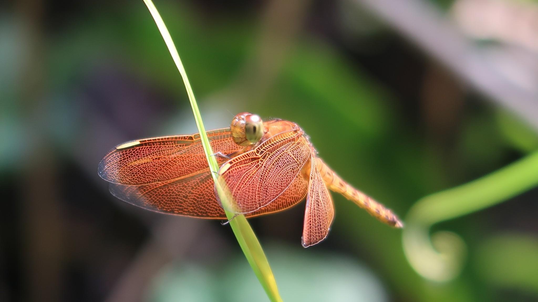 Insekten im Regenwald Borneo