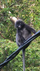 Begegnung mit einem Affen