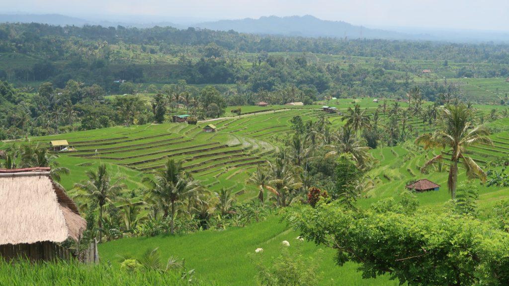 Reisterrassen - Reiseberichte aus Indonesien