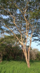 Nusa Bay Indonesien