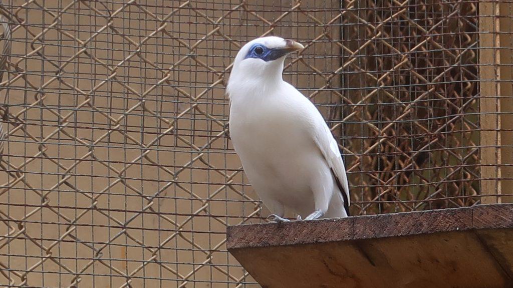 Bird Balistar