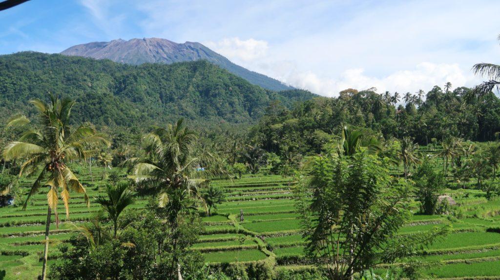 Reisterrassen und Vulkan