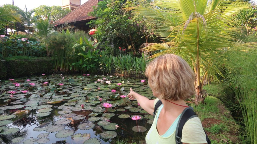 Lotusblüten Garten Teich
