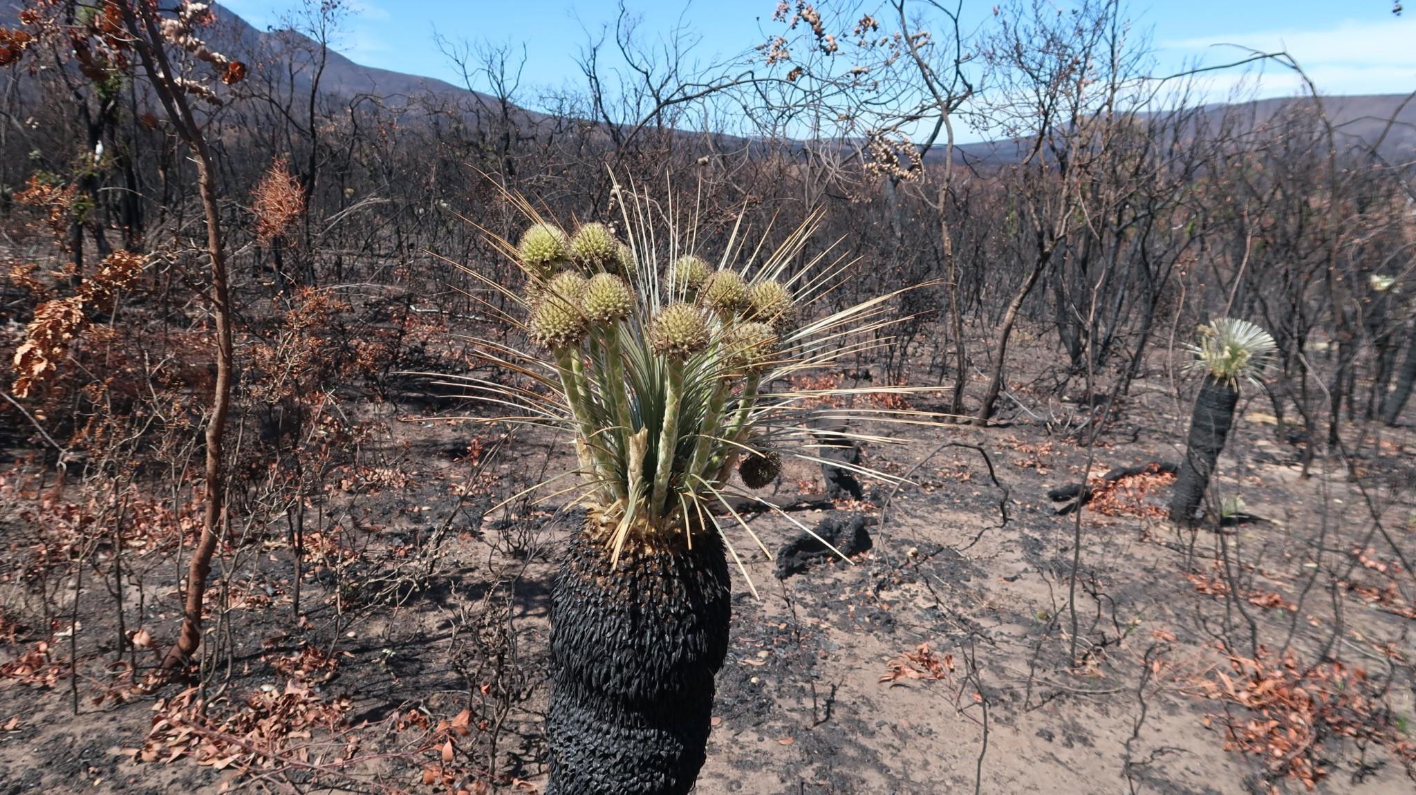 Bushfire Australien